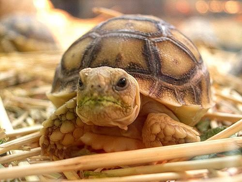 Сколько стоит черепаха