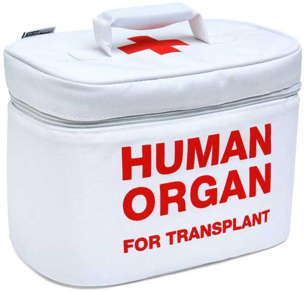 Сколько стоит мужское яичко Хирургия Трансплантация Органы Мужское яичко Медицина Здоровье