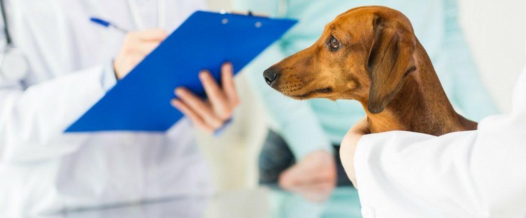 Сколько стоят ветеринарные услуги цена стоимость расценки ветеринарные услуги